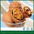 Novos produtos de alta proteína de alibaba gostam de nozes