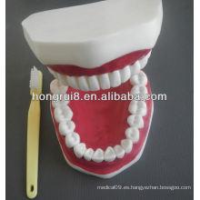 Nuevo modelo de cuidado dental médico modelo, modelo dental plástico de los dientes