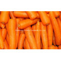 2016 New Crop Fresh Chinese Carrot