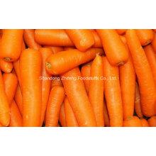 2016 Nouvelle récolte de carottes chinoises fraîches