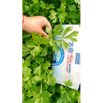 Hydroponic Fertilizer NPK For Irrigation System