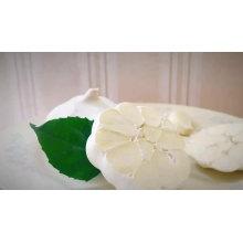 Свежий чистый белый чеснок 4,5 см