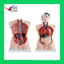 Órgãos Femininos Masculinos avançados de 85CM (19 partes), Modelo de Ciência