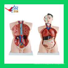 85CM продвинутые мужские женские мужские органы (19 частей), научная модель