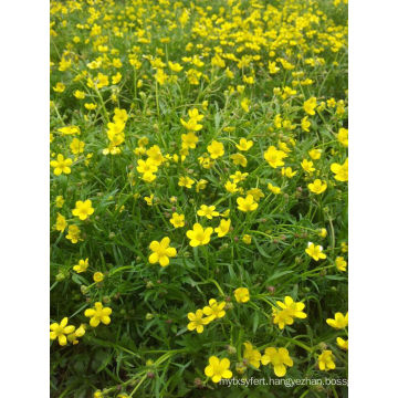 100% Natural Catclaw Buttercup Root Tuber Extract