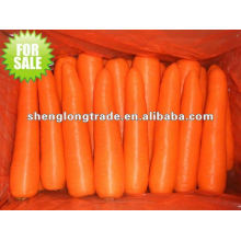fresh chinese red carrot in 10kg carton
