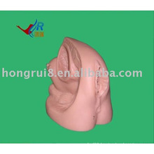 Advanced female internal and external genitalia model