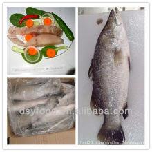 Peixe congelado barramundi peixe de mar