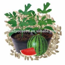 NRT01 Zhenmu hybrid rootstock seeds for sale