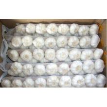 Box Normal White Garlic In Whole Garlic