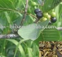 Rhamnus purshianus Bark (cascara sagrada bark) Extract