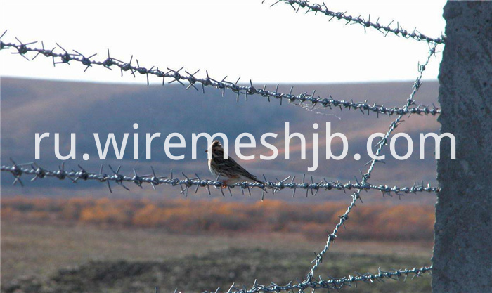 Galvanized Barbed Wire Fence