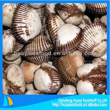 fresh frozen blood clam