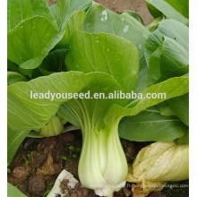 MPK09 Youli précoce maturité vente chaude vert pakchoi graines pour la plantation