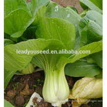 MPK09 Youli early maturity hot sale green pakchoi seeds for planting