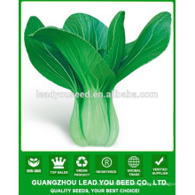 JPK08 Liangmei extremely early mature chinese pakchoi seeds f1 for vegetable seeds
