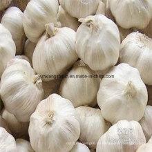 New Crop Frischer Knoblauch Rein Weiß und Normal Weiß