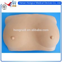 Modelo de examen de mama suave ISO