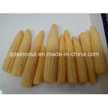 Baby Corn Glass Jar Packing