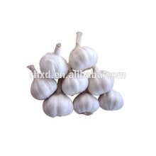 2014 new crop fresh garlic association