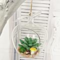 Wholesale Apple Shaped Glass Hanging Air Plant Terrarium