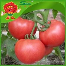 Свежие помидоры Китая