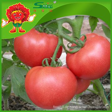 Frische Tomaten aus China