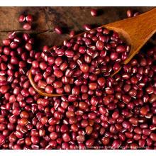 Planta de frijol rojo frijoles rojos pequeños