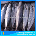 whole round IQF spotted mackerel