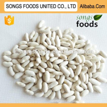 egyptian white kidney beans in China
