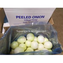 Peeled yellow onion to Australia