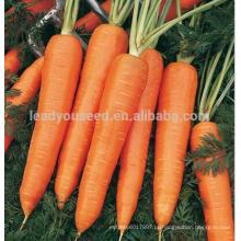 ACA071 Honghuo alta qualidade 8 polegadas empresas de sementes de cenoura vermelha