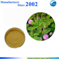 Hot sale & hot cake high quality nature Mimosa Pudica extract , mimosa pudica powder
