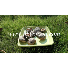 Getrocknete Gemüse Gesichts glatte Shiitake Mushroom Spawn