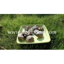 Desidratado vegetal seco suave Shiitake Cogumelo Spawn