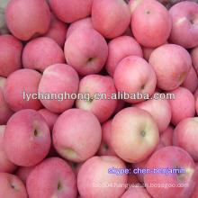 China wholesale custard Apple fruit for sale