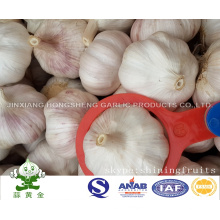 Normal White Garlic 6.0cm New Crop Products