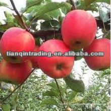Поставки 2012 Китай дешевое яблоко