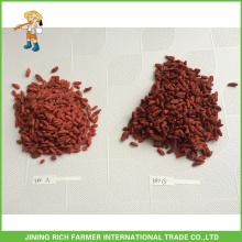 Extrémité de baies Goji séchée en Chine Goji Berry 380g grains / 50g Prix bas