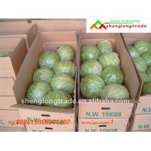 Cheap repolho verde fresco chinês