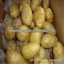 healthy potato in china