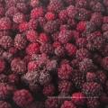 Zl-1046 Anic Blackberry Zl-1046 13