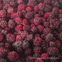 Zl-1046 Anic Blackberry Zl-1046 29