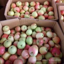 Apple fraîche, pomme de gala rouge sans sac