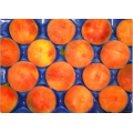Термоформованные блистер Перфорированный экспортируемых фруктов подносы упаковка для персика и Косточковых фруктов