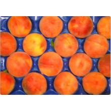 La boursouflure perforée par boursouflure thermoformée a exporté des plateaux d'emballage de fruit pour la pêche et le fruit en pierre