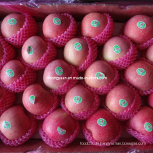 Verpackt in 20kg Karton frischen Qinguan Apfel