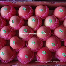 Emballé en 20kg Carton Fresh Qinguan Apple