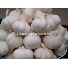 2016 Normal White Fresh Garlic 5cm