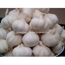 2016 Normal White Fresh Garlic 5cm